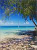 relaks pod palmami