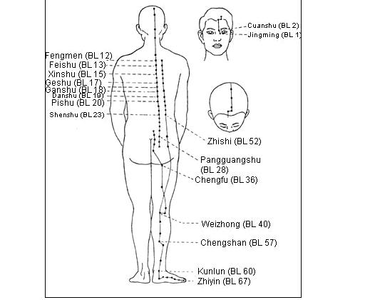 meridian pęcherza moczowego kurs online